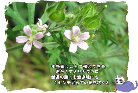 f0137096_2154885.jpg