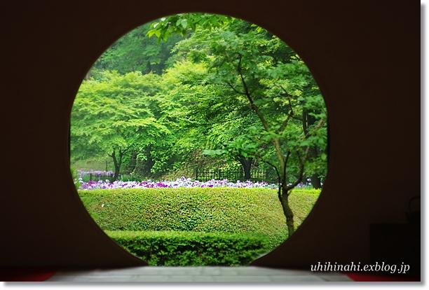雨上がりの鎌倉・明月院_f0179404_20591765.jpg