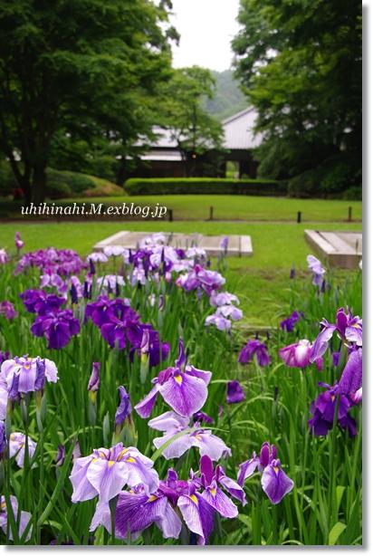 雨上がりの鎌倉・明月院_f0179404_2114441.jpg