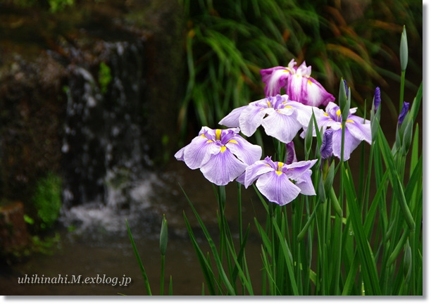 雨上がりの鎌倉・明月院_f0179404_21323564.jpg