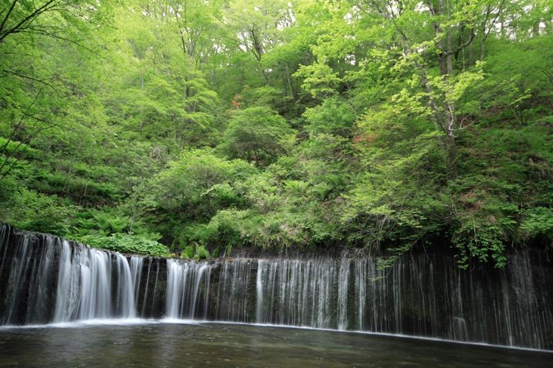 六月の白糸の滝_f0091207_2172225.jpg