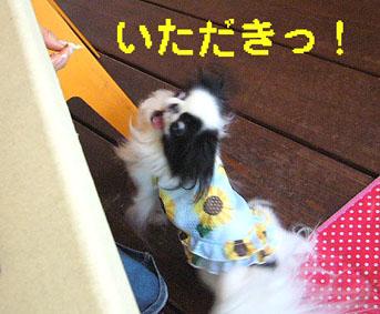 ひまわり娘_c0199014_1024215.jpg