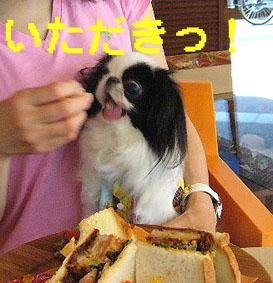 ひまわり娘_c0199014_10244046.jpg