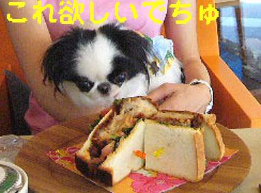 ひまわり娘_c0199014_1024788.jpg