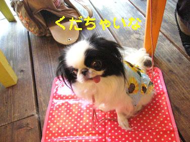 ひまわり娘_c0199014_10261526.jpg
