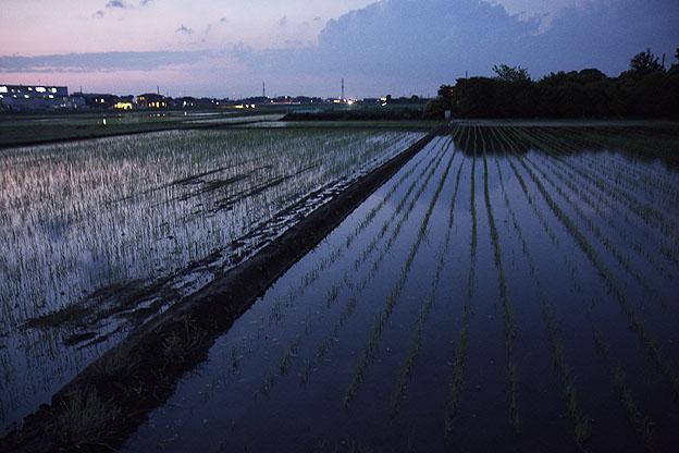 トワイライト、日が暮れて_b0010915_0111611.jpg