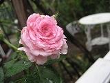 f0139520_18102065.jpg