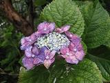f0139520_1811138.jpg