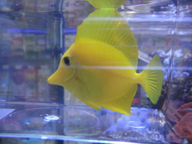 海水魚・サンゴ・水草・日本産淡水魚_f0189122_134927.jpg