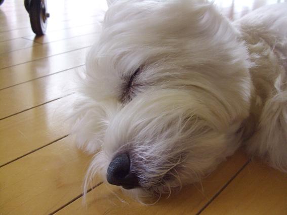 眠り姫_b0107163_18203331.jpg