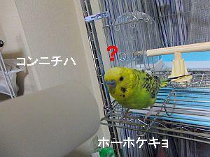f0196665_031515.jpg