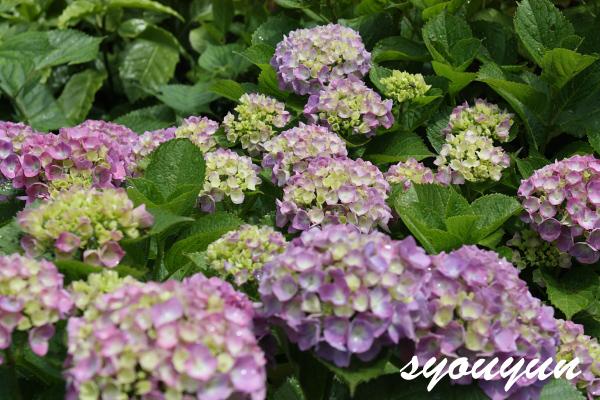 e0138067_2010321.jpg