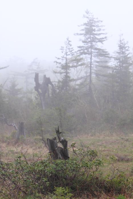 霧の駒止湿原_e0143883_20483995.jpg