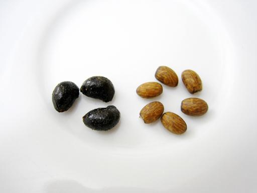 ジュサーラヤシの果実と種子