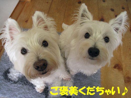 f0084422_20114115.jpg