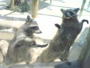 動物園の風景1_f0064823_9264157.jpg