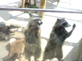 動物園の風景1_f0064823_9265113.jpg