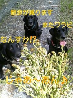 f0148927_1895616.jpg
