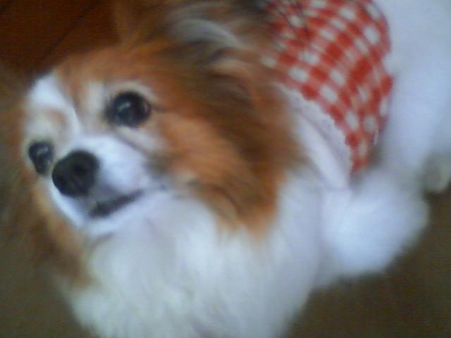 愛犬_f0200428_16175517.jpg