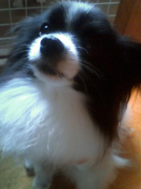 愛犬_f0200428_16181161.jpg