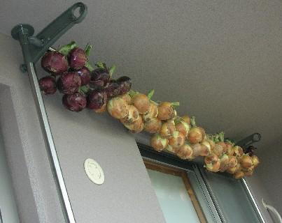 玉ねぎ収穫&保存_f0150629_21434570.jpg