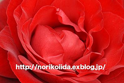 d0086230_8432617.jpg