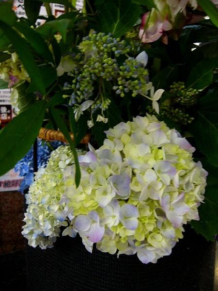 花とベルクのあいだで_c0069047_1152541.jpg