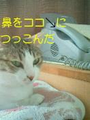 c0052756_15245935.jpg