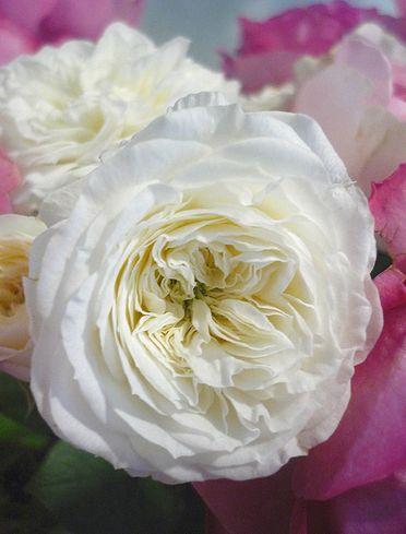薔薇の名前は。。。  「無垢なる風景-別府から代官山へ」    ブログの世界。。。* *。:☆.。† _a0053662_10122072.jpg