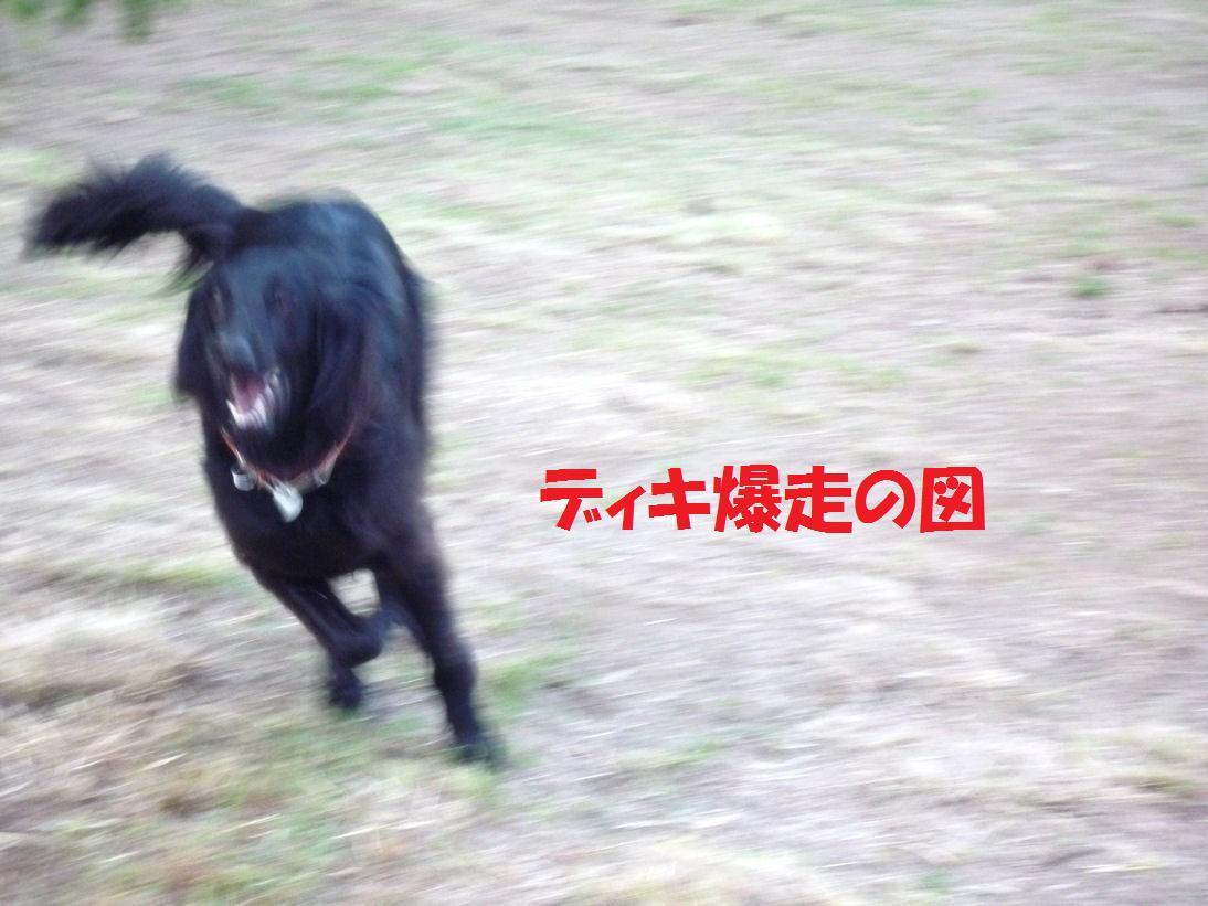 a0104464_12324149.jpg