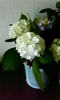f0170387_1048546.jpg