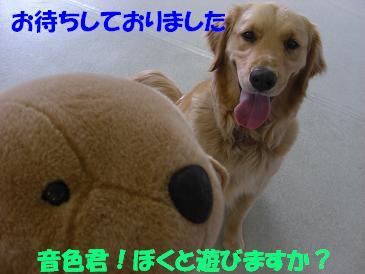 f0170713_1241576.jpg