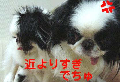 c0199014_1045991.jpg