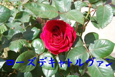 c0130324_21213228.jpg