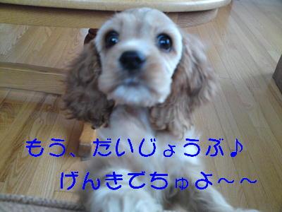 b0176428_16412976.jpg