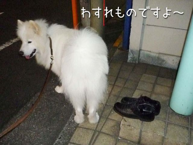 お散歩大好き_c0062832_16291738.jpg