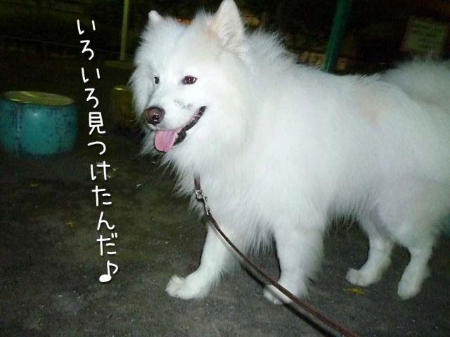 お散歩大好き_c0062832_16293451.jpg