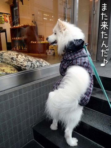 お散歩大好き_c0062832_16294659.jpg