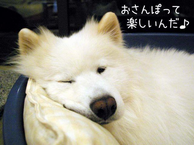 お散歩大好き_c0062832_1630242.jpg