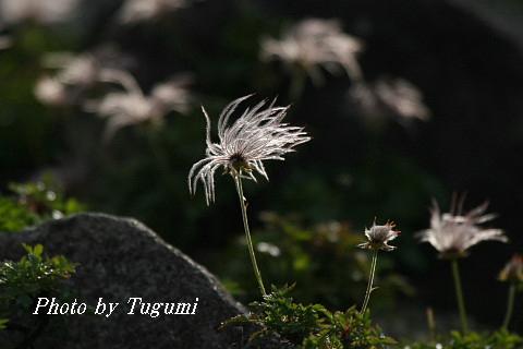 剣岳登頂の記_f0037633_195098.jpg