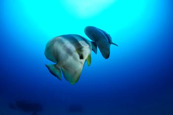 数万匹の魚_b0186442_16233957.jpg