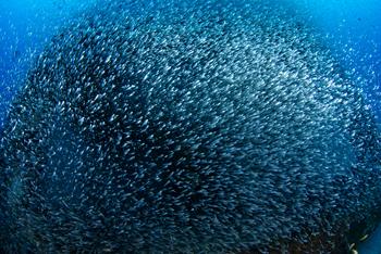 数万匹の魚_b0186442_16235752.jpg