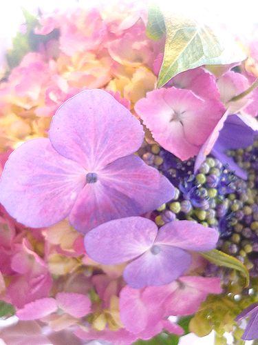 BENOIT ブノワ東京 ~  Un paysage par~  「無垢なる風景-別府から代官山へ」 ブログの世界。☆.。†_a0053662_19202836.jpg