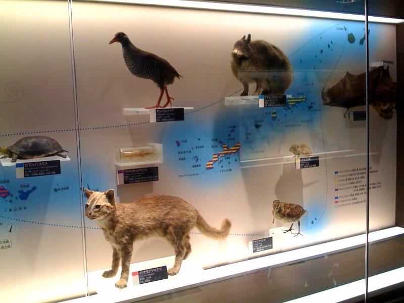 国立科学博物館 大恐竜展_f0011179_7292113.jpg