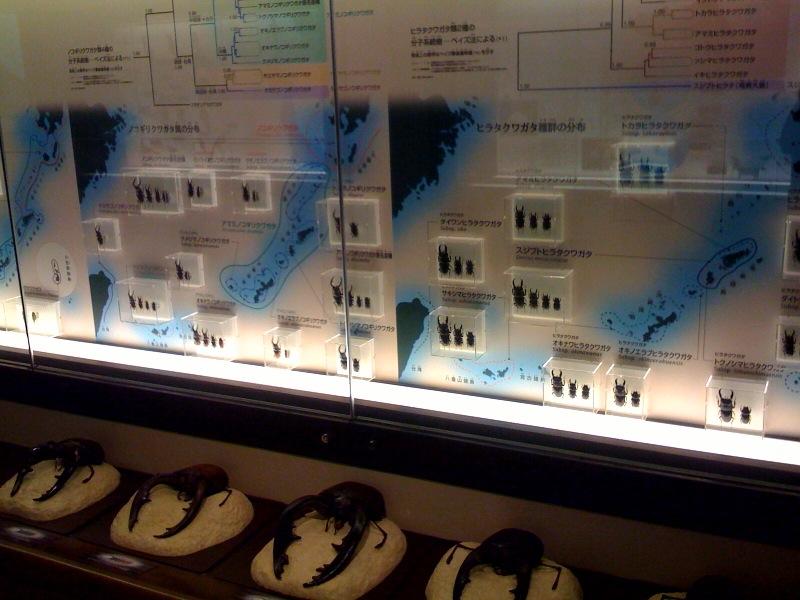国立科学博物館 大恐竜展_f0011179_7294884.jpg