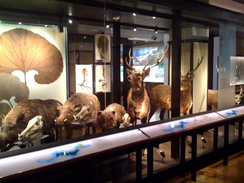 国立科学博物館 大恐竜展_f0011179_7304630.jpg