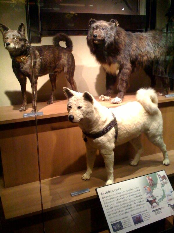 国立科学博物館 大恐竜展_f0011179_7392317.jpg