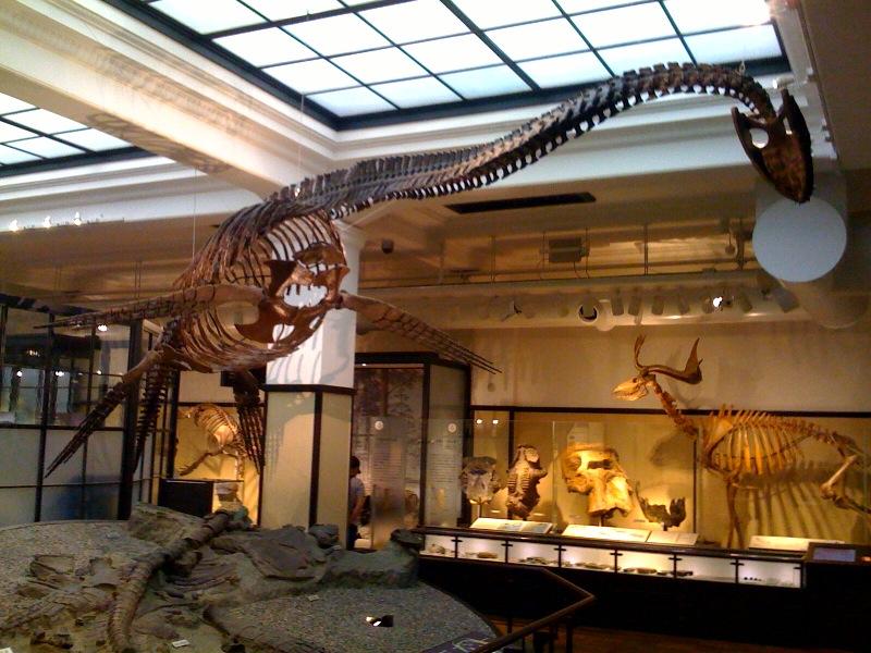 国立科学博物館 大恐竜展_f0011179_7434898.jpg