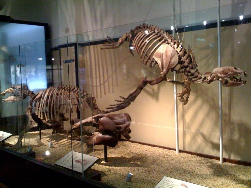 国立科学博物館 大恐竜展_f0011179_743919.jpg