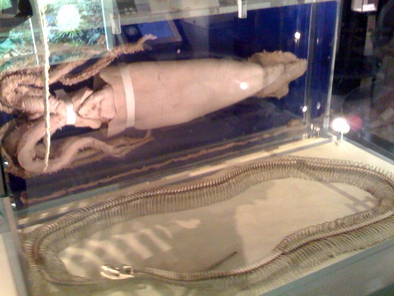 国立科学博物館 大恐竜展_f0011179_747314.jpg